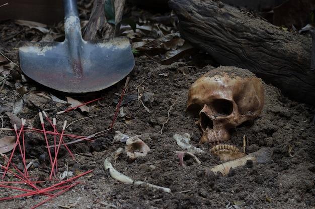 Cráneo y huesos cavados del hoyo en el aterrador cementerio / naturaleza muerta y enfoque selectivo