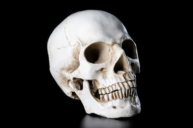 Cráneo humano aislado sobre fondo negro. concepto de día de halloween