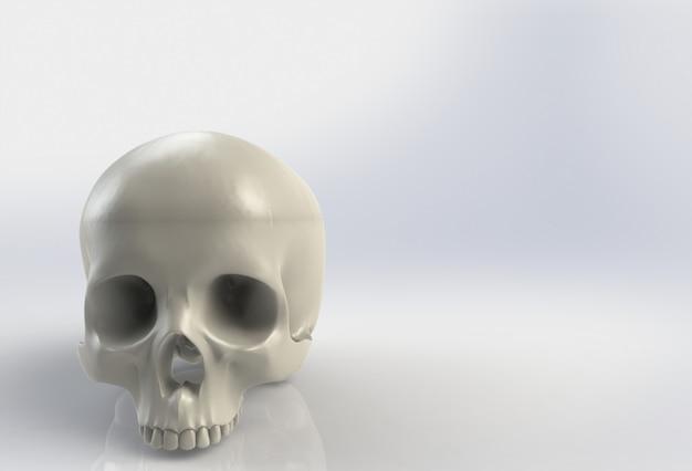 Cráneo humano en fondo blanco aislado