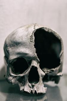 Cráneo humano roto de cerca