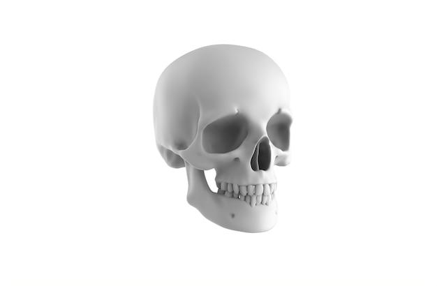 Cráneo humano sobre fondo blanco