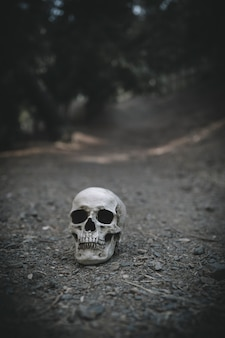 Cráneo melancólico colocado en el suelo