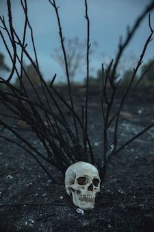Cráneo realista con ramas mirando a otro lado