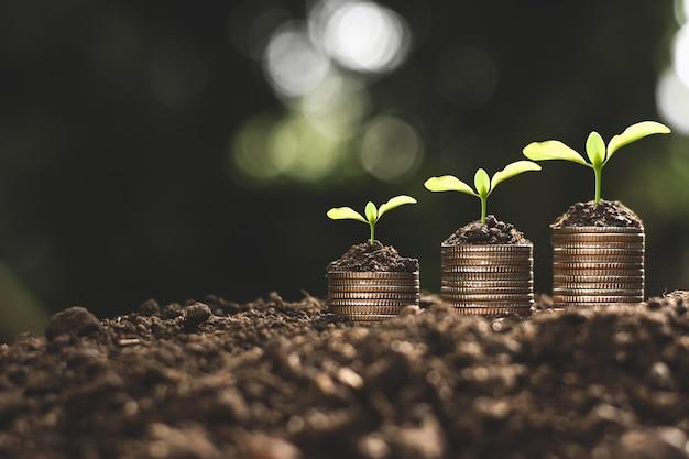 Crecimiento financiero, monedas y plántulas.