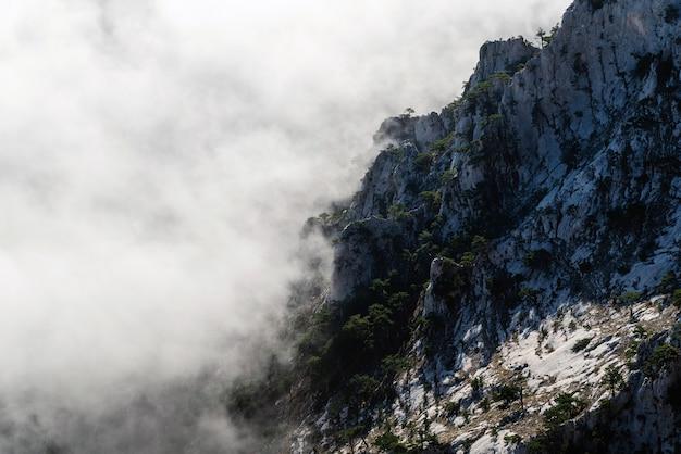 Crestas rocosas cubiertas de pinos en la niebla, vista desde la altura de las montañas, concepto de recreación, turismo, contemplación, meditación, belleza de la naturaleza