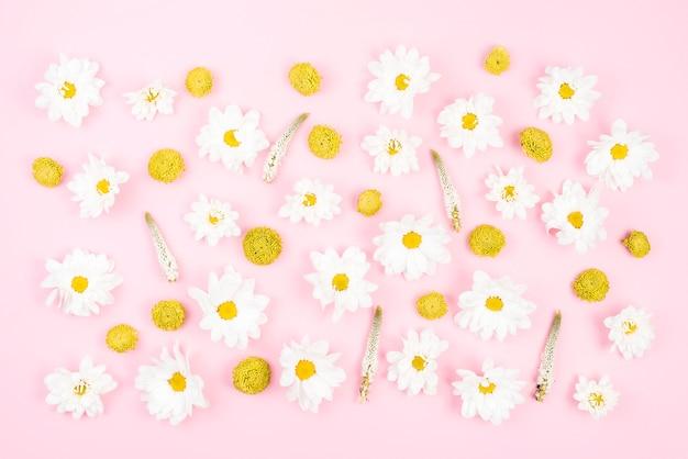Crisantemo amarillo y flores blancas sobre fondo rosa