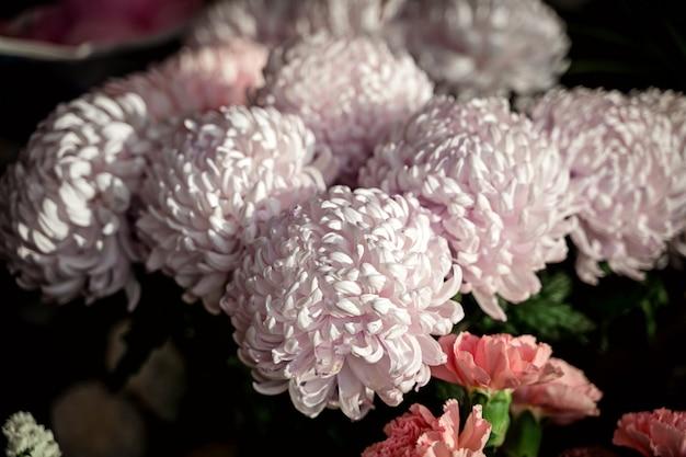 Crisantemo rosado hermoso