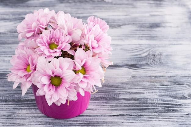 Crisantemo rosado en maceta