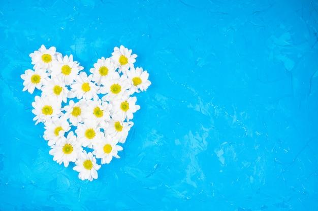 Crisantemos sobre fondo azul