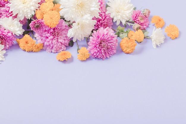 Crisantemos sobre papel violeta