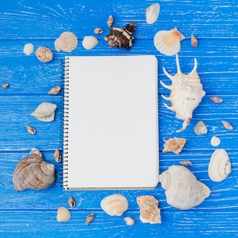 Cuaderno con colección de conchas marinas.