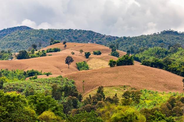 Cuando las montañas se convierten en campos de maíz. es triste ver