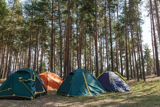 Cuatro carpas en un bosque de coníferas. tiendas de campaña en un bosque de coníferas.