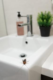 Cucaracha en el baño en el lavabo. el problema con los insectos.