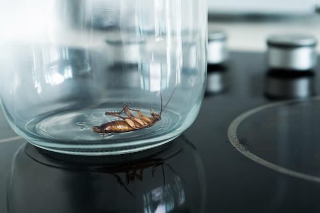 Cucaracha en un frasco de vidrio