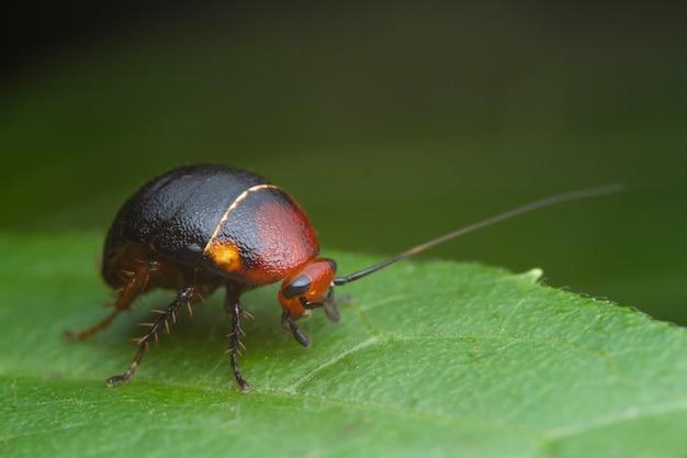 Cucaracha en hoja verde