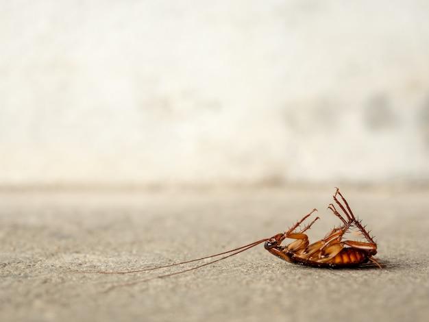 Cucaracha muerta en el suelo.