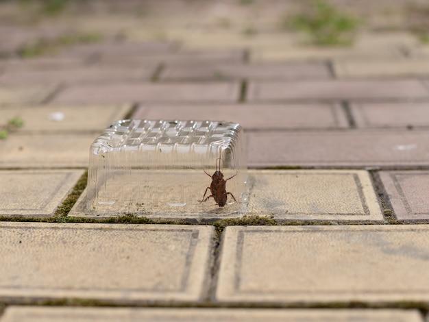 La cucaracha quedó atrapada debajo de un recipiente de plástico transparente.