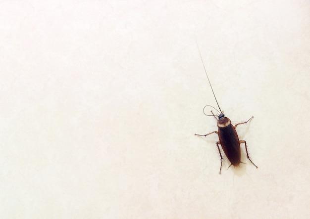 Una cucaracha sobre un terreno llano es un animal portador que provoca enfermedades digestivas muy peligrosas.