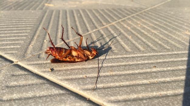 Cucarachas muertas en el piso de cemento