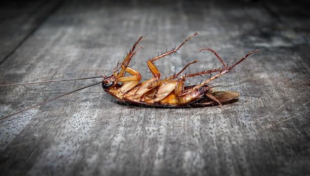 Las cucarachas yacen muertas en el suelo de madera