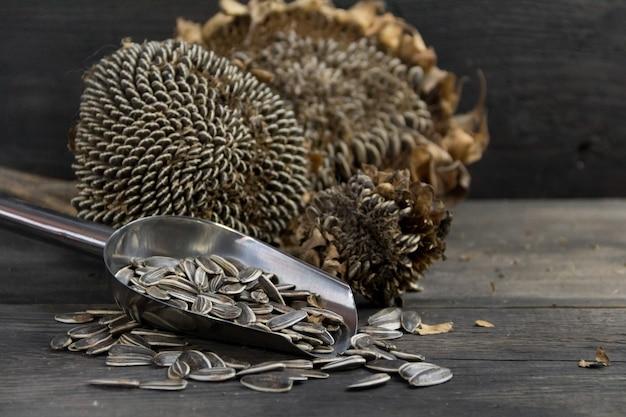 Cuchara con semillas y flores de girasol secas sobre fondo de madera