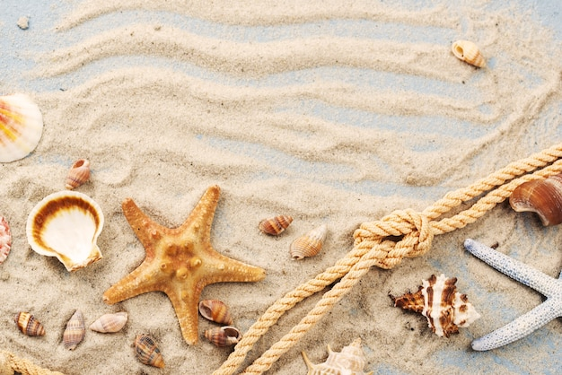 Cuerda con estrellas de mar y conchas al lado