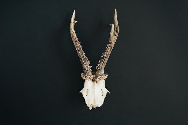 Cuernos de cabra en pizarra negra