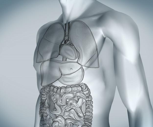 Cuerpo digital gris con órganos