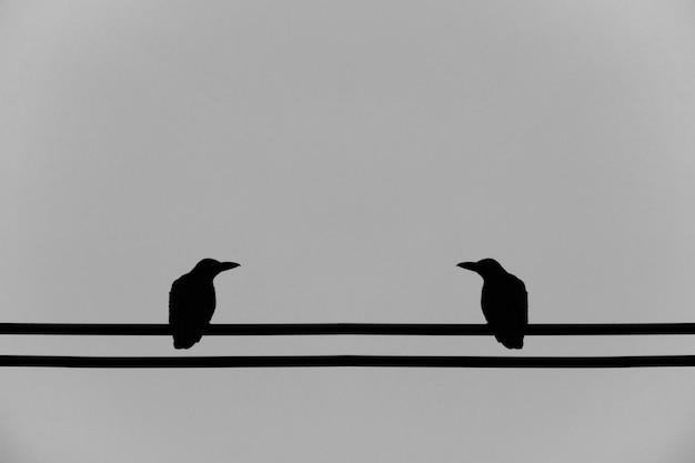 Cuervo en un cable eléctrico