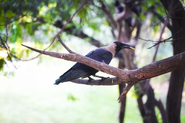 Cuervo en imágenes de árboles: concepto de animales y aves