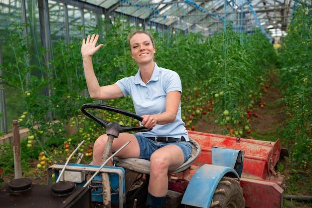 Cuida las verduras en un invernadero con un tractor pequeño.