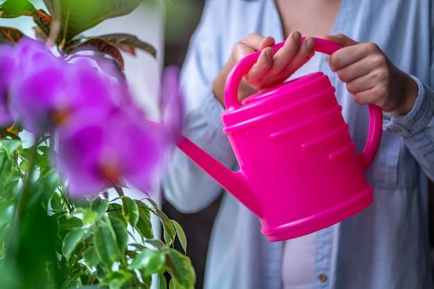 Cuidado de flores. regando la flor de la orquídea en casa