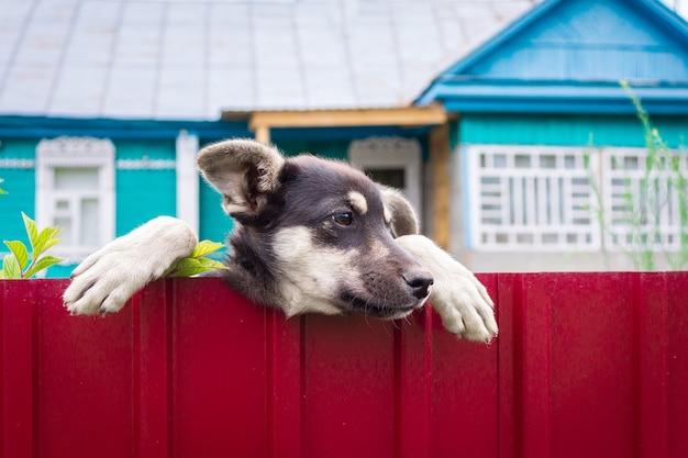 Cuidado con el perro malvado