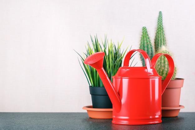 Cuidado de plantas de interior. plan de interior y herramienta en la mesa con espacio de copia.