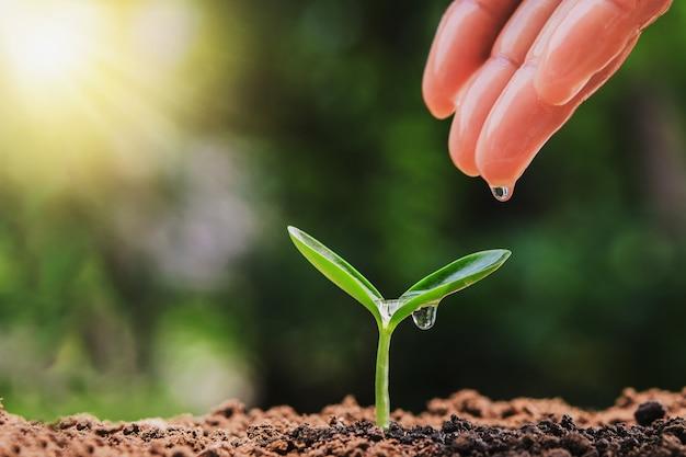 Cuidado de riego de mano de plántulas en jardín con sol