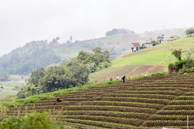 Cultiva hortalizas en las montañas de tailandia, copia espacio.