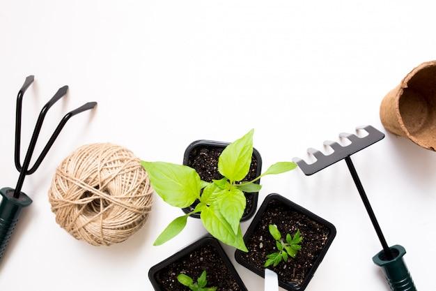 Cultivando vegetales. temporada de primavera. utensilios de jardinería y macetas para plantas.