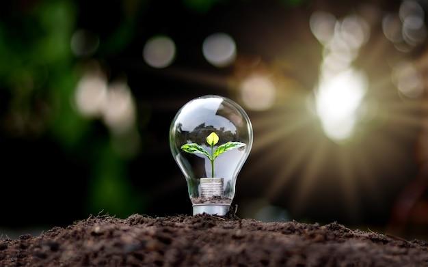 Cultive árboles verdes con dinero en bombillas de bajo consumo de luz suave con la idea del crecimiento económico y el día mundial del medio ambiente.