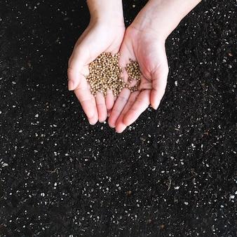 Cultive las manos sosteniendo semillas