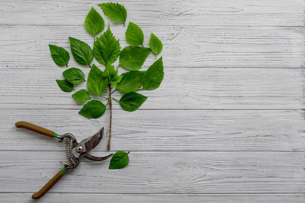 Cultivo de planta