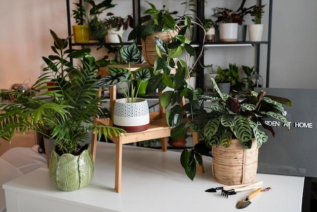 Cultivo de plantas en concepto de hogar.