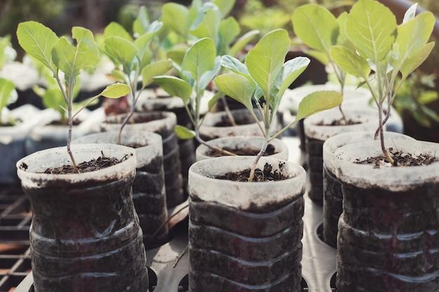 Cultivo de vegetales en botellas de plástico usadas, reutilizar reciclar concepto ecológico