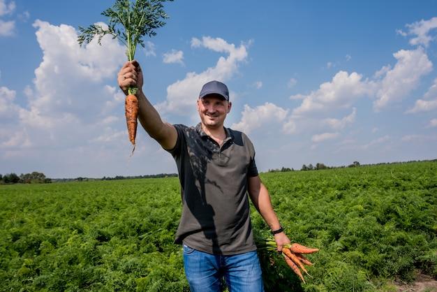 Cultivo de zanahorias orgánicas. zanahorias en manos de un granjero. zanahorias recién cosechadas. cosecha de otoño. agricultura.