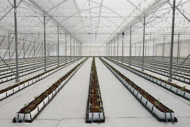 Cultivos en invernadero.