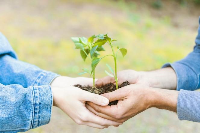 Cultivos que llevan árboles jóvenes