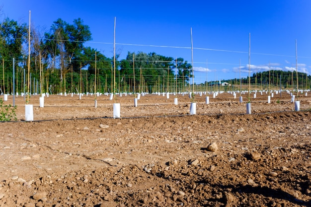 Cultivos de riego por goteo en una zona de secano.