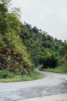 Curva de carretera en el bosque