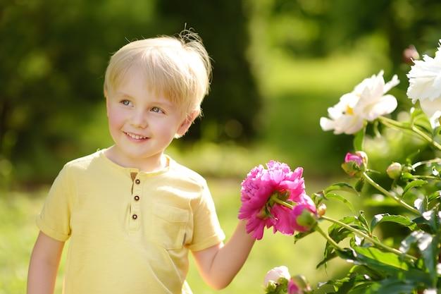 Cute little boy mira increíbles peonías púrpuras y blancas en un soleado jardín doméstico