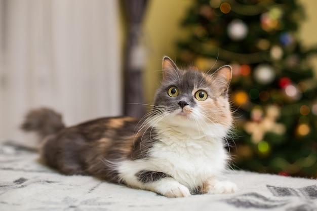 Cutie cat relajándose en el sofá de casa